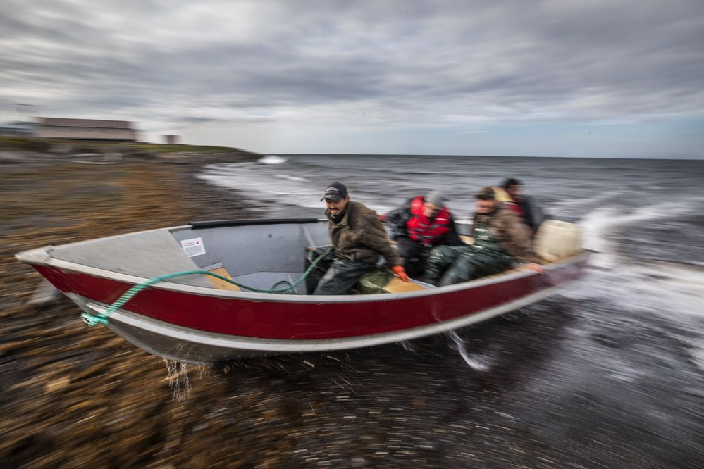 Saturday, August 24, 2019. An 18 foot aluminum boat speeds up onto the rocky beach in Savoonga, timing the swells from the Bering Sea after longline fishing for halibut. The owner, Walker Akeya, is at the stern, one of his crew, Robin Kogassagoon is in the bow. (Steve Ringman / The Seattle Times) ONE TIME USE