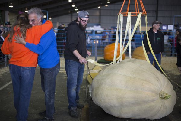 Dave Iles of North Pole is congratulated after winning the 12th Annual Alaska's Midnight Sun Great Pumpkin Weigh-Off during the Alaska State Fair Tuesday, August 29, 2017, in Palmer. Iles's pumpkin,