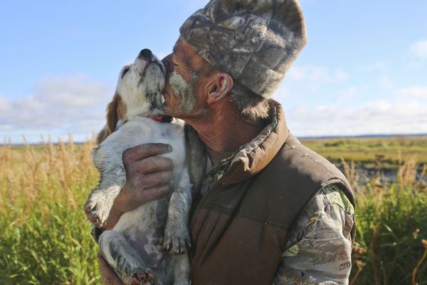 Boss, an English setter, joined Steve Meyer on a hunting trip to Redoubt Bay Flats as a puppy. (Christine Cunningham photo)