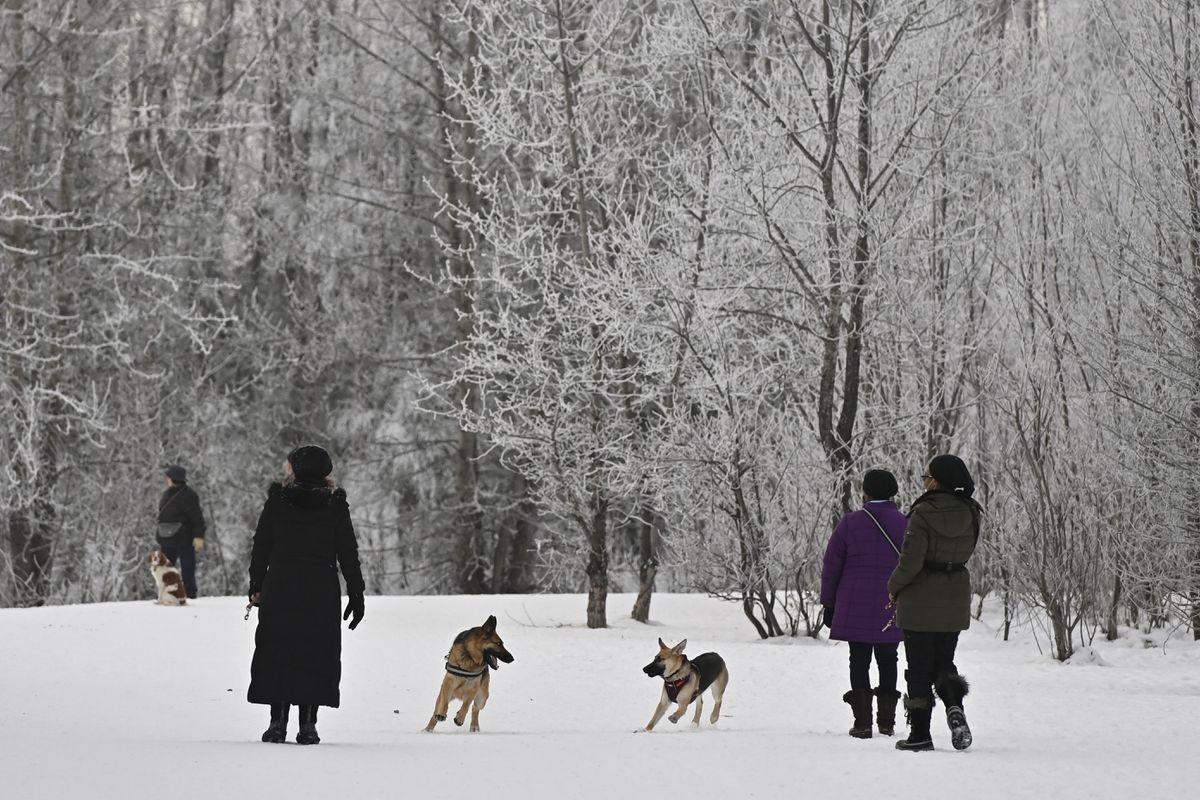 Dogs play at University Lake Dog Park on January 25, 2021. (Marc Lester / ADN)