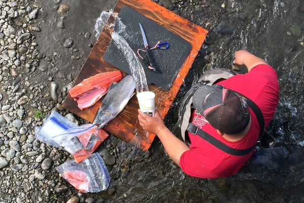 Ele Faafiti cleans and fillets salmon caught at Ship Creek on Sunday, July 30, 2017. (Bill Roth / Alaska Dispatch News)