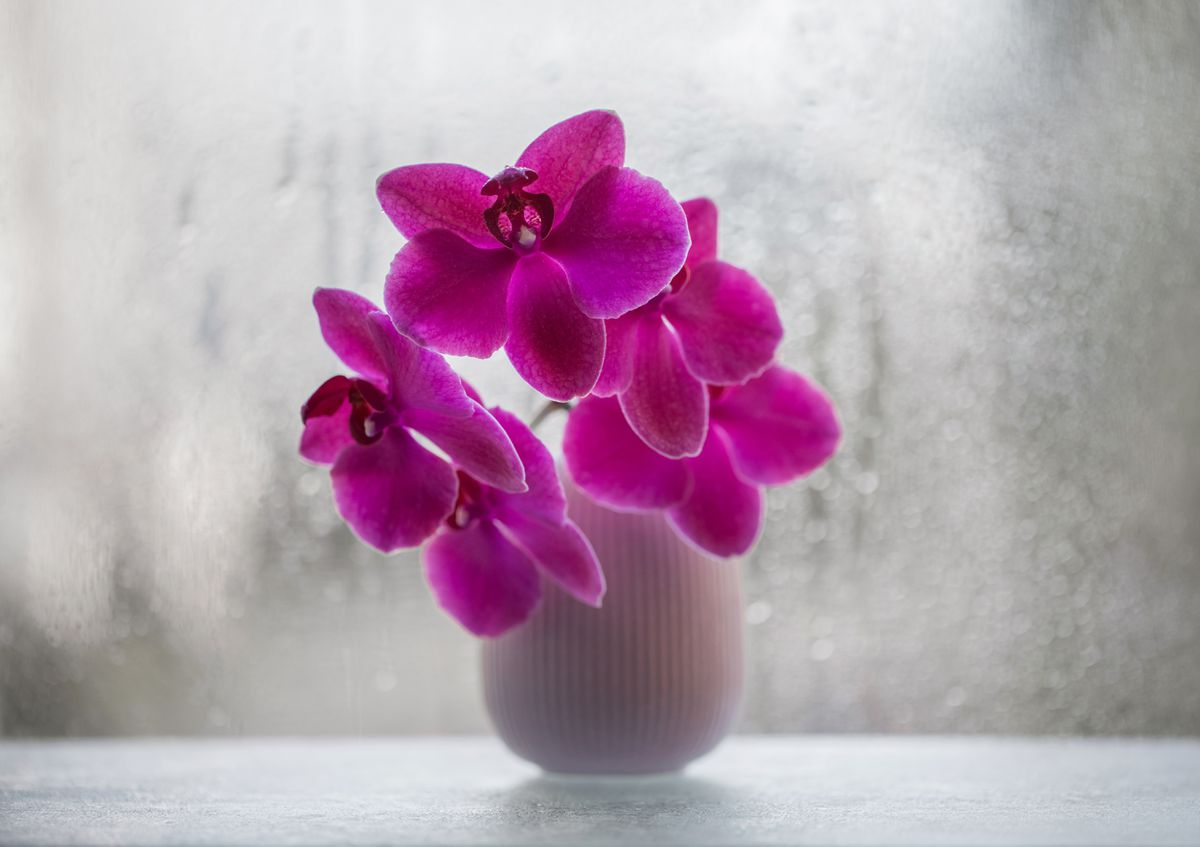 With modern, inexpensive lights and ways to control temperatures at night as well as during the day, it really can be easy to grow orchids. (Getty Images)