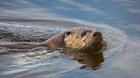 River otter attacks 9-year-old boy at East Anchorage pond