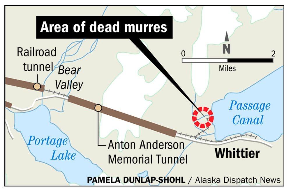 Massive seabird die-off lines Whittier beaches with