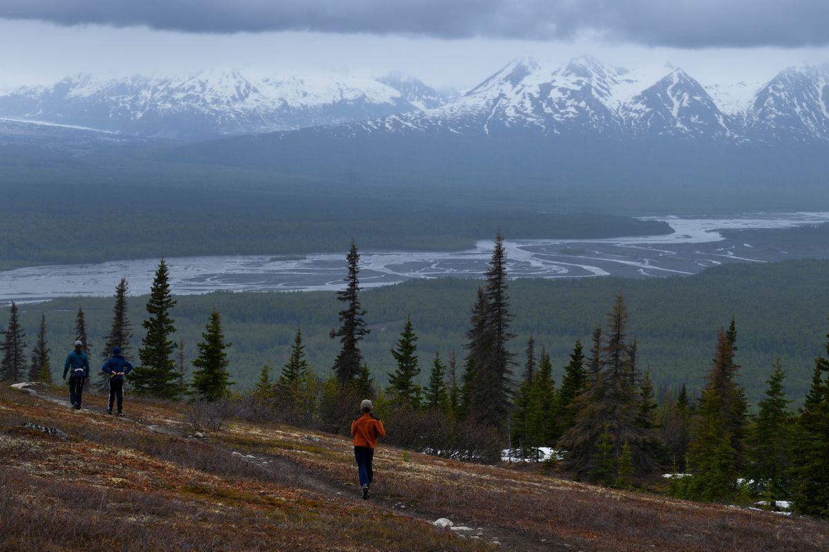The Alaska Range is in view in the distance on a rainy day on Curry Ridge in Denali State Park on May 25, 2020. (Marc Lester / ADN)