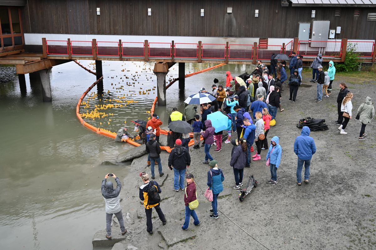 A small crowd waits anxiously on the bank of Ship Creek while the winning rubber ducks of The Great Alaska Duck Race are plucked from the water on Saturday, September 7, 2019. (Jeff Parrott / ADN)