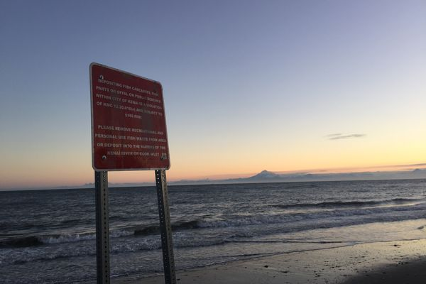A sign spelling out how fish must be disposed of sits near the high tide line on the north beach at the mouth of the Kenai River on Tuesday, July 7, 2015. Salmon carcasses must be thrown into the river or ocean or removed from the beach entirely. Mount Redoubt, a 10,129-foot volcano that last erupted in 2009, can be seen in the background at right.
