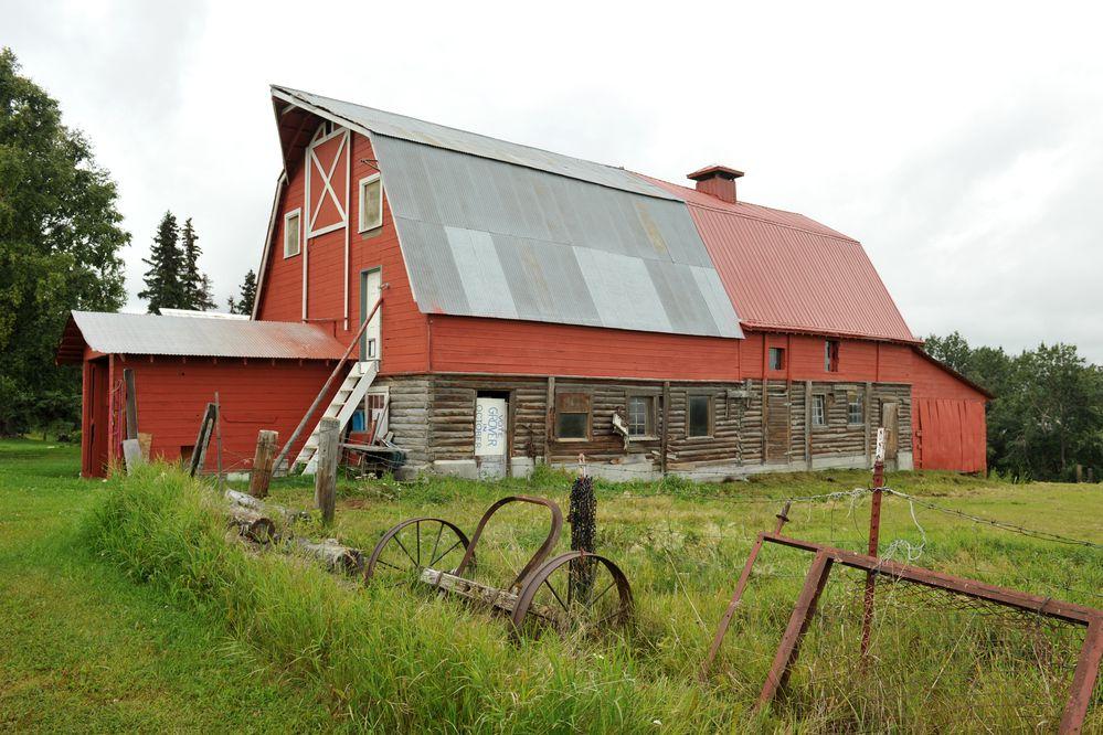 The two Matanuska Colony barns on the Wesley Grover farm in the Palmer, Alaska area are in good shape on Thursday August 17, 2017. (Bob Hallinen / Alaska Dispatch News)
