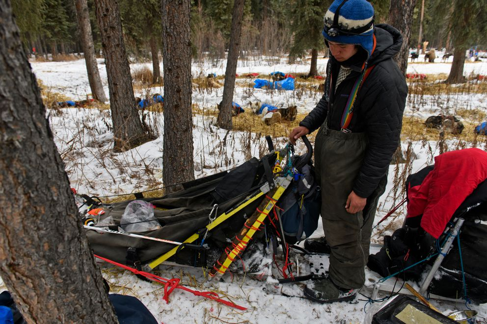 While stopped in Rohn during the Iditarod on March 5, 2019, musher Martin Apayauq Reitan looks at repairs he made to his sled, which included a branch tied to a broken portion. (Marc Lester / ADN)