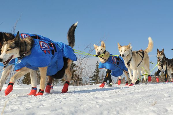 Iditarod musher Joar Leifseth Ulsom drives his dog team out of the village of Koyuk during the 2017 Iditarod Trail Sled Dog Race on Monday, March 13, 2017. (Bob Hallinen / Alaska Dispatch News)