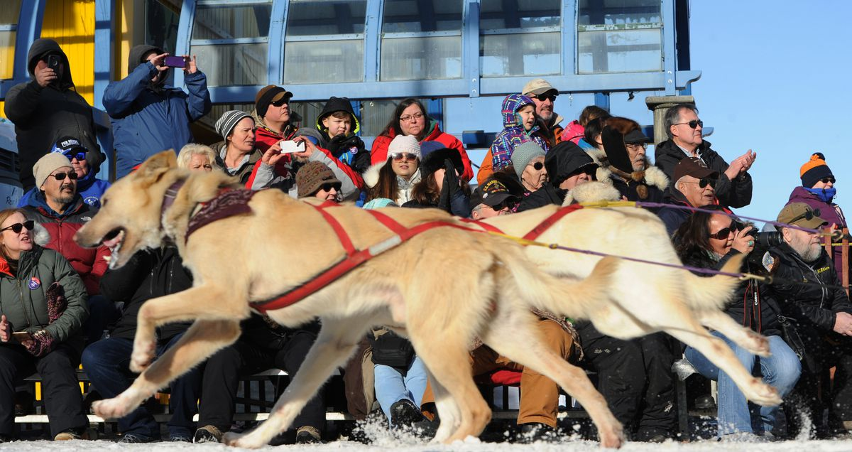 Lead dogs in Matt Paveglio's dog team pass by spectators on Fourth Avenue during the final day of the Fur Rendezvous Open World Championship Sled Dog Race on Feb. 24, 2019. (Bill Roth / ADN archive)