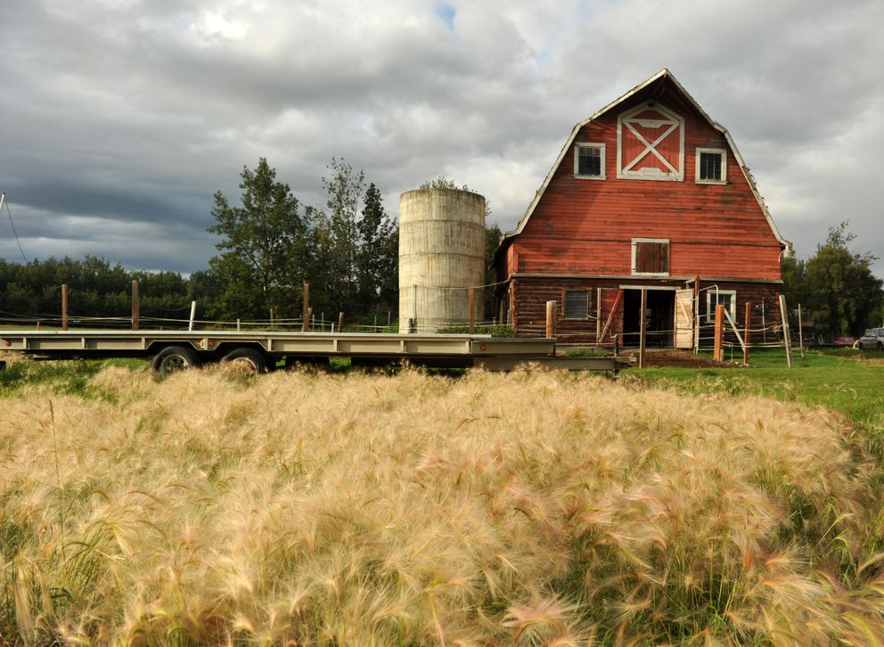 One of the two Matanuska Colony barns on Frank Stewart's farm rests in the sunshine across from the Alaska State Fairgrounds in Palmer. (Bob Hallinen / ADN)