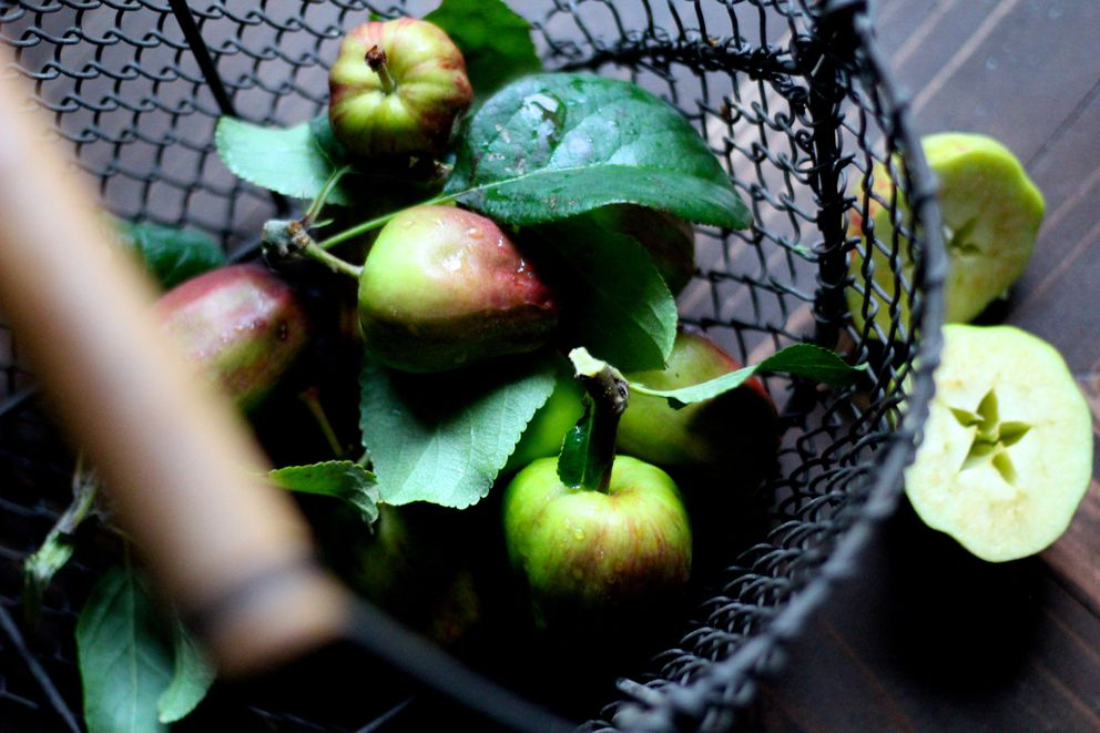 A bounty of apples collected after this week's storm (Maya Wilson / Alaska from Scratch)
