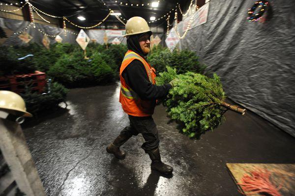 Jesse Harris carries a fresh Christmas tree indoors at Alaska Mill & Feed on Monday, Dec. 4, 2017. (Bill Roth / ADN)