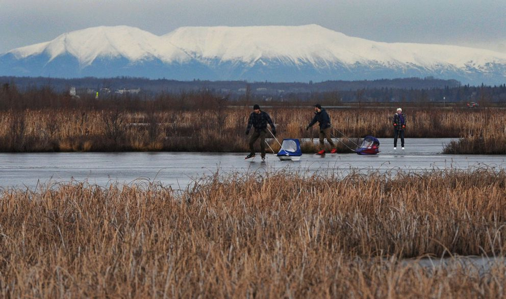 Daniel Johnson and Mark Rowe pull their children in pulks while ice skating at Potter Marsh on Nov. 27, 2018. Suzanne Johnson follows at right. (Bill Roth / ADN)