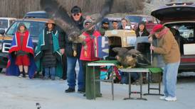 Despite festival, warmer weather scatters Haines-area eagles