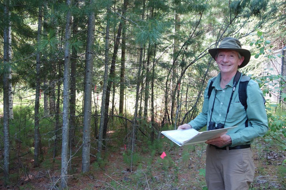 Artist and UAF professor emeritus Kes Woodward in a stand of exotic trees on the Fairbanks campus. (Photo by Ned Rozell)