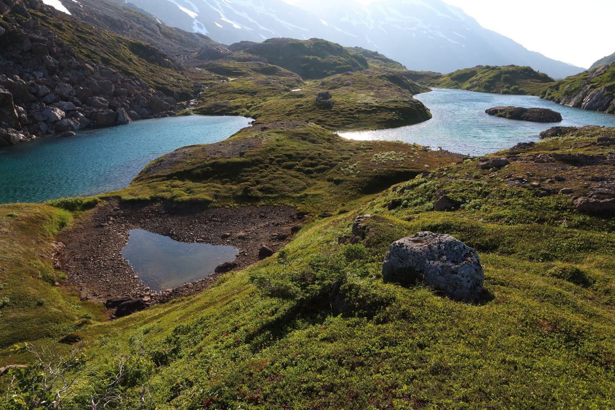 These lakes are connected by only a foot or two of tundra, and are near the 5-mile trail built in Kachemak Bay State Park. (Ground Truth Trekking)