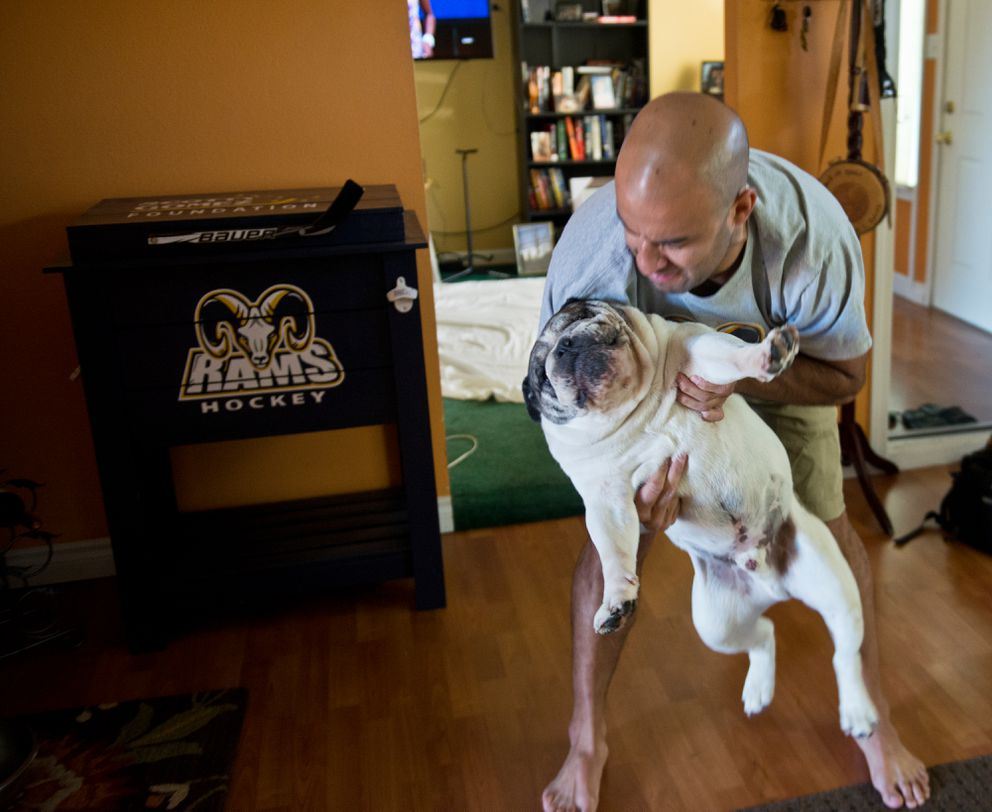 Scott Gomez picks up his family's English bulldog, Bacon, at his Airport Heights home on Tuesday. (Marc Lester / Alaska Dispatch News)