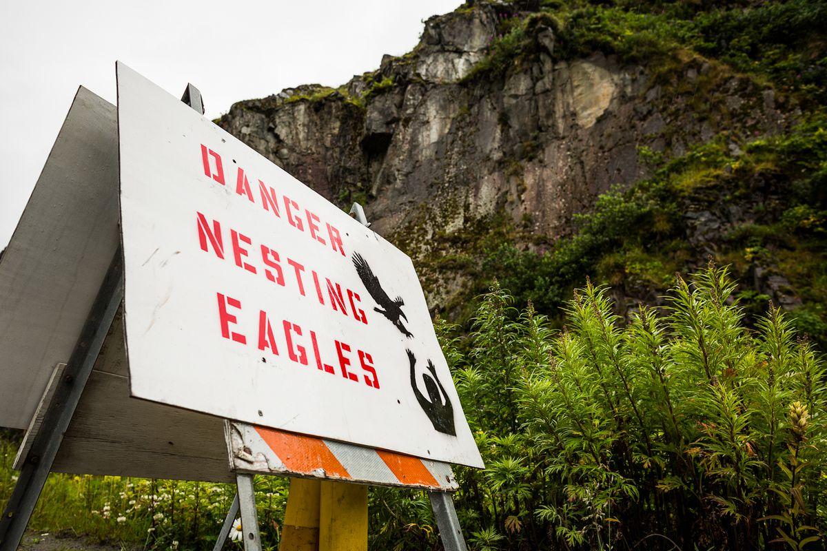 A sign in Unalaska warns of attacks by aggressive eagles. (Loren Holmes / ADN file photo)