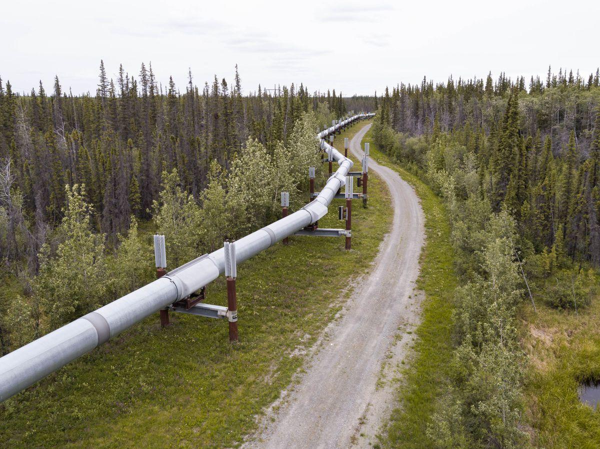 The trans-Alaska oil pipeline near Copper Center on June 29, 2017. (Loren Holmes / ADN)