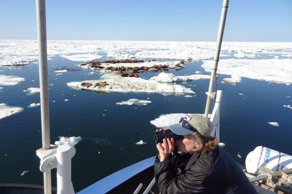 Biologist Lori Quakenbush monitoring Arctic marine mammals. (U.S. Fish and Wildlife Service photo via KYUK)