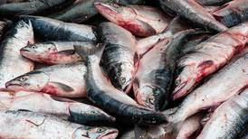 King salmon closures hurt, but we violate them at our own peril