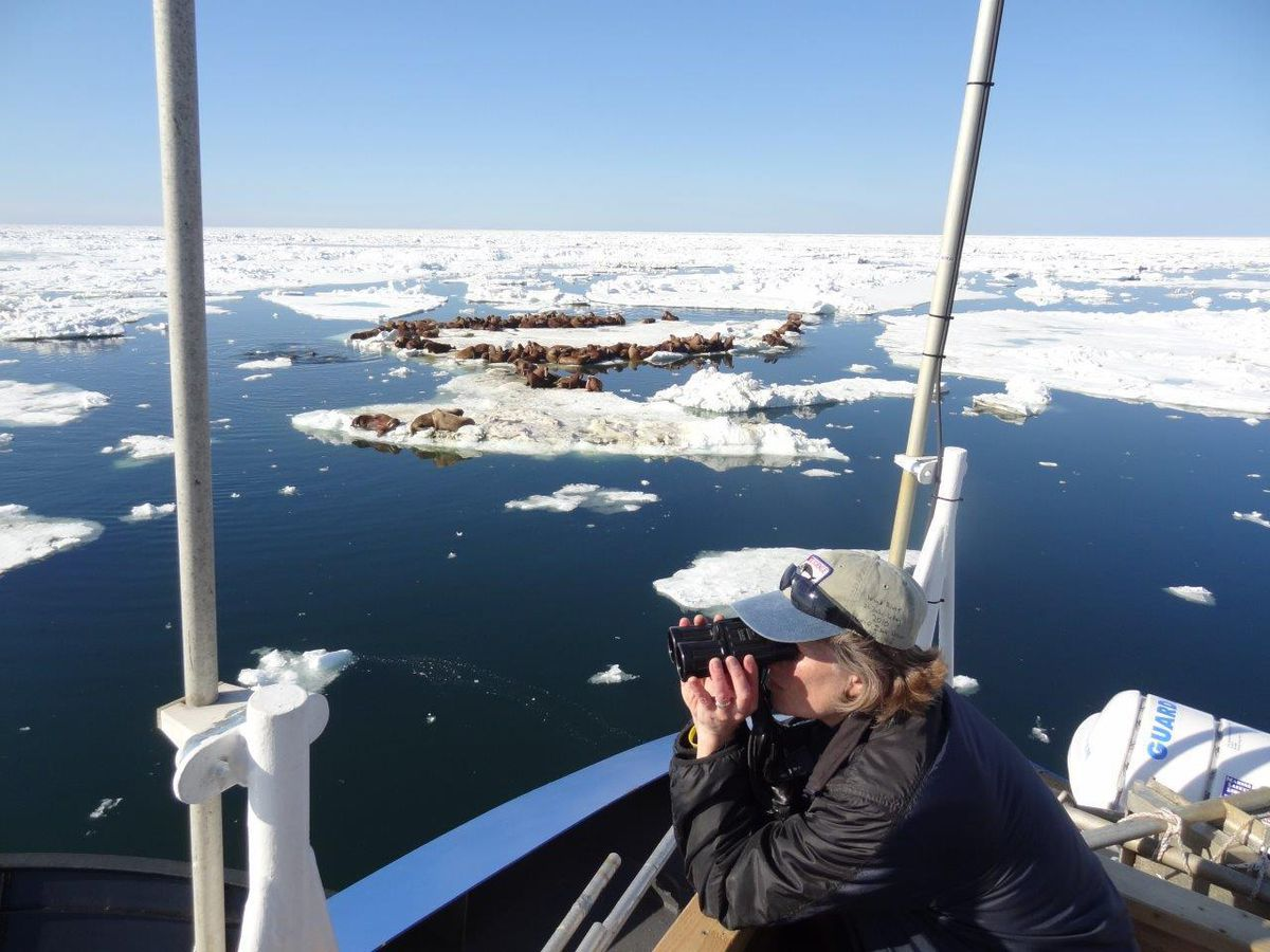 Biologist Lori Quakenbush monitoring Arctic marine mammals. (U.S. Fish and Wildlife Service photo via KYUK)