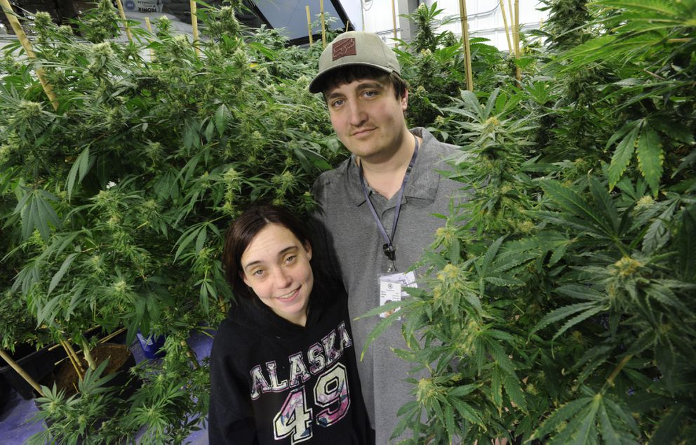 Lacey and Ron Bass, at their cannabis cultivation facility in Houston. (Bill Roth / Alaska Dispatch News)
