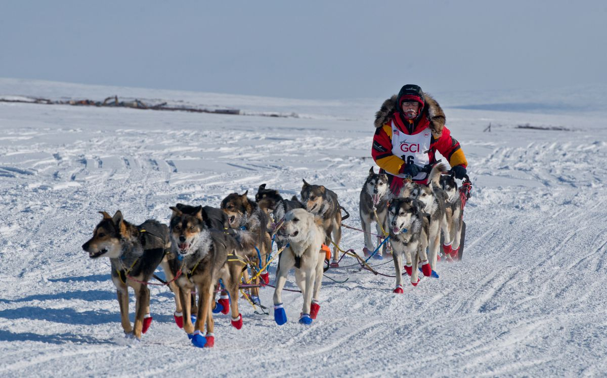 Is aseven-day Iditarod on the horizon? Mitch Seavey set the speed record last yearby winning in 8 days, 3 hours, 40 minutes. (Marc Lester / Alaska Dispatch News)