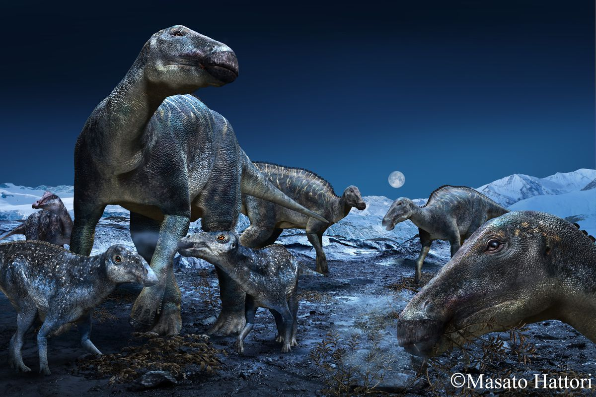 An artist's rendering of a duck-billed, plant-eating dinosaur that was once common from Alaska to Colorado. (Masato Hattor)