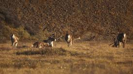 As hunters wait for the next caribou season to open, the Nelchina herd is moving quickly