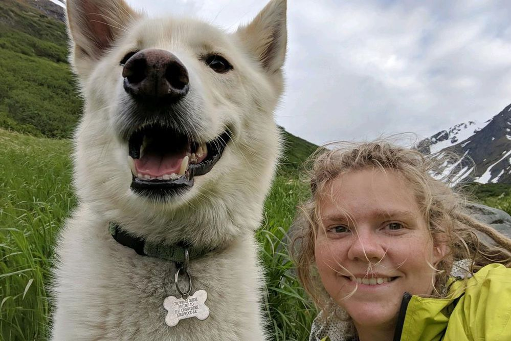 Nanook helped Amelia Milling when she fell during a hike through Crow Pass and then again crossing the Eagle River, Wednesday, June 20, 2018. Nanook, an Alaska husky, is an adventurous dog who lives with Scott Swift at the end of Crow Creek Road. (Photo by Amelia Milling)