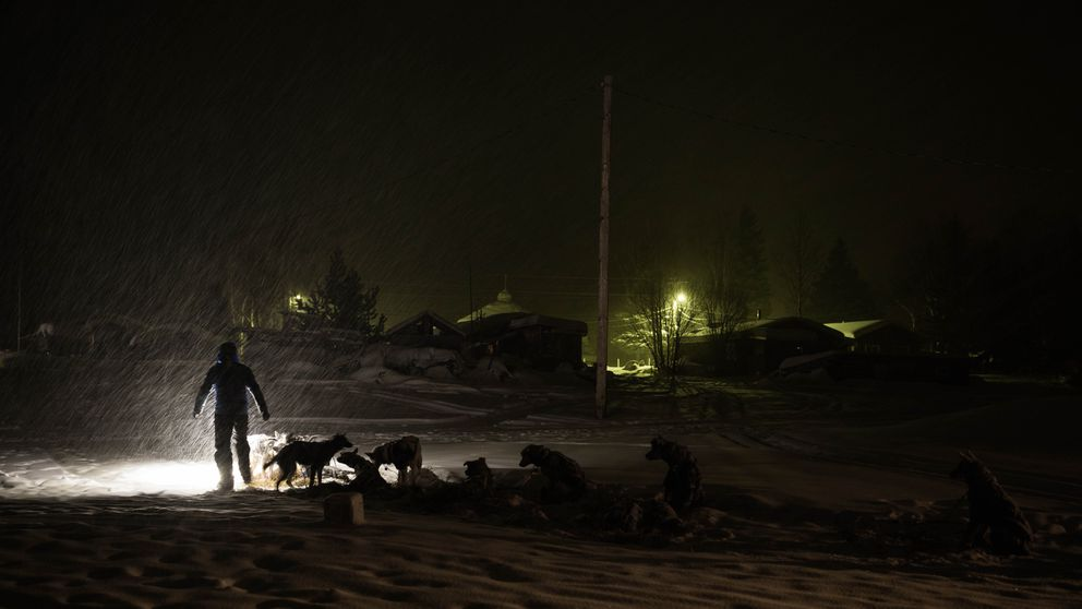 Larry Daugherty prepares to leave the Nikolai checkpoint on March 6 during the Iditarod Trail Sled Dog Race. (Loren Holmes / ADN)