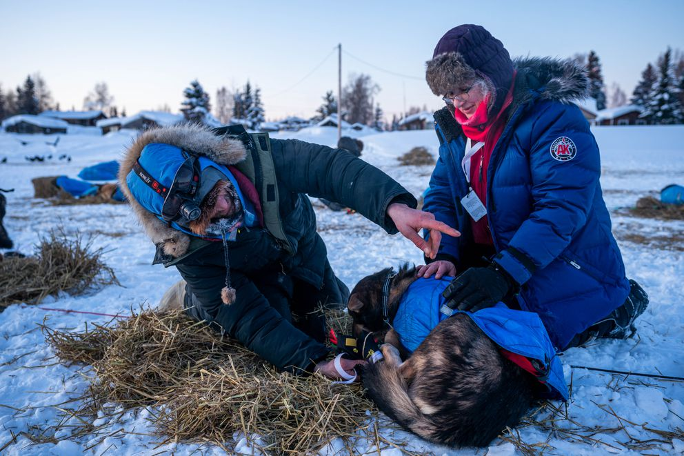 Nicolas Petit tends to his dogs while veterinarian Karen Myhre checks them after he arrived in Nikolai on Tuesday. (Loren Holmes / ADN)