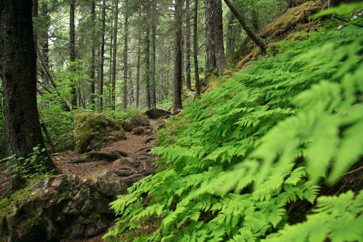 Chilkoot Trail out of Skagway. (iStock / Getty Images)