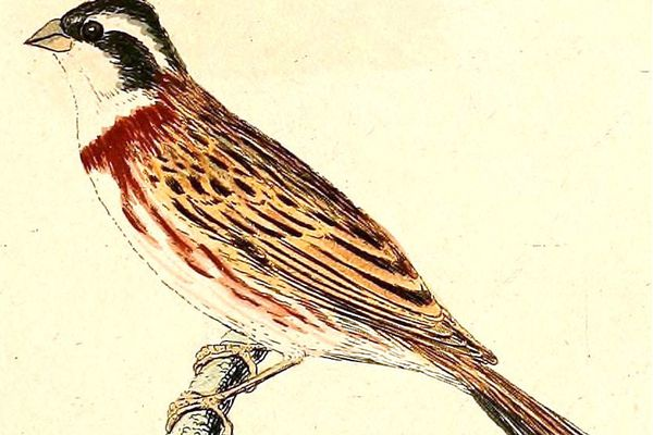 A Massachusetts man's Homer sighting of a rustic bunting -- a bird native to Asia and rarely seen in North America -- helped him spot a record number of birds in North America in 2013.