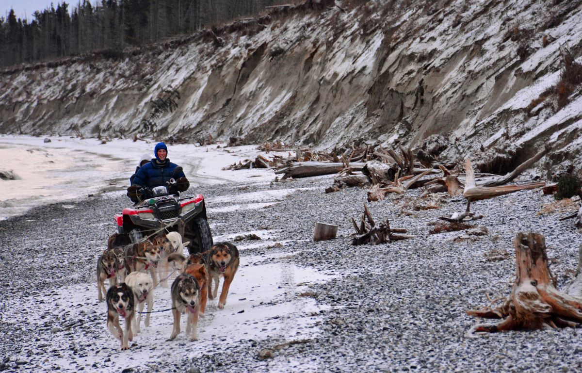 Veteran Iditarod musher Colleen Roberta takes some of the dogs from the kennel that she and her husband operate in Kasilof on a beach run along Cook Inlet. (Photo by Joseph Robertia)