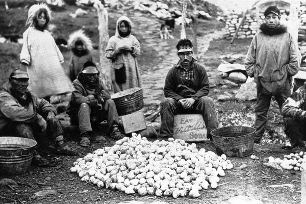 "Men and children looking over murre eggs. ""Menadelook: An Inupiat Teacher's Photographs of Alaska village Life, 1907-1932"