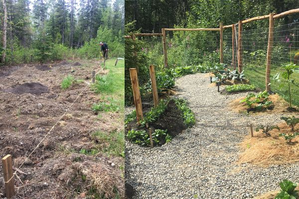 Before and after photos of a new Butte neighborhood garden in the summer of 2020. (Photo by Alli Harvey)