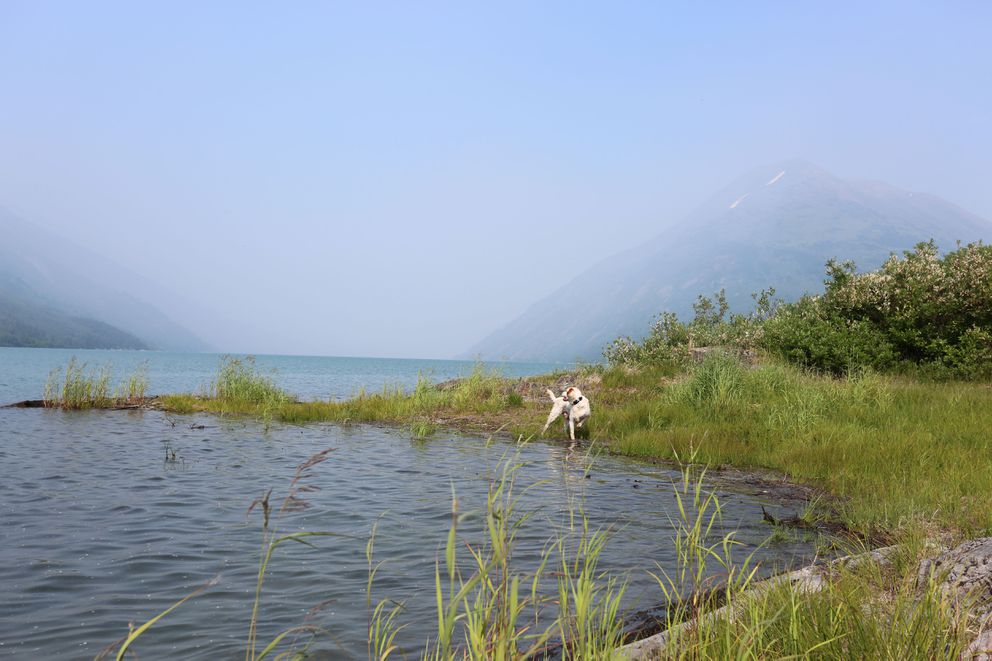 Boss explores a lake shore last with Swan Lake wildfire smoke behind him last week. (Photo by Steve Meyer)