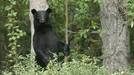Bear enters camper through open door near Seward and scratches sleeping man
