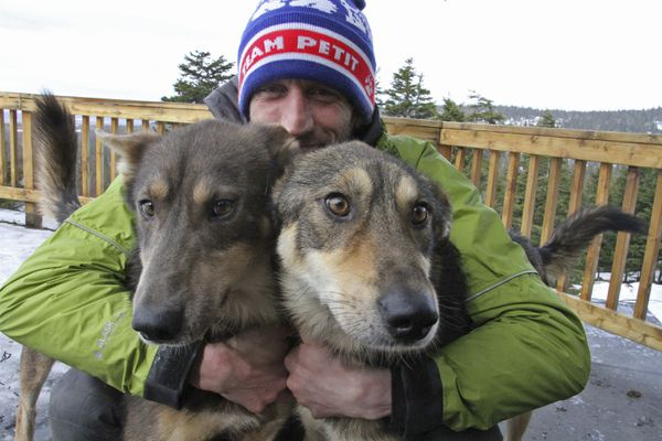This Wednesday, March 20, 2019, photo shows Iditarod musher Nicolas Petit posing with two of his dogs in Anchorage, Alaska. The Frenchman was in the lead of this year's race but his dog team quit running after Petit yelled at Joey, left, to stop picking on Danny, right. Petit says that isn't the reason the dogs quit running; instead, they quit about the same point the team got lost in a blizzard in the 2018 race. (AP Photo/Mark Thiessen)
