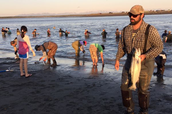 As the fishing picks up, people deal with their catch, as others wait in the water for fish to hit their nets. Thousands of people were on the Kenai River to dipnet for sockeye salmon Sunday July 19, 2015. (Anne Raup / Alaska Dispatch News)