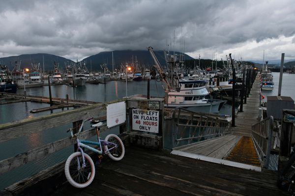 Commercial fishing boats take up much of the Cordova boat harbor on September 17, 2019. (Marc Lester / ADN)