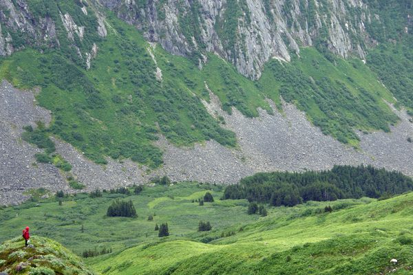 Vegetation in Paradise Valley, Petersburg Ranger District, Tongass National Forest, Alaska, in August 2011. (Karen Dillman/USDA Forest Service)
