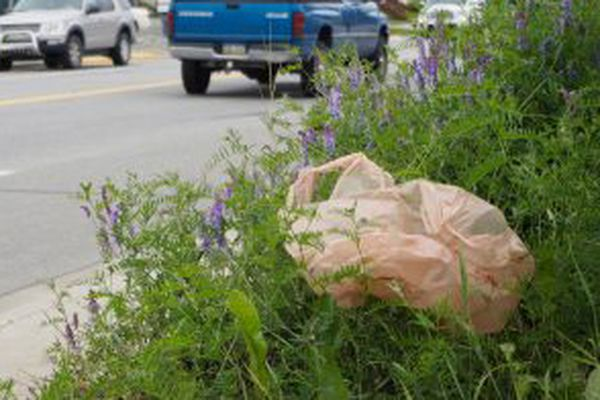 A plastic bag is caught along South Alaska Street in Palmer on Aug. 1, 2017. (Marc Lester / ADN)