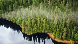 Biden administration ends large-scale logging of old-growth timber in Alaska's Tongass National Forest