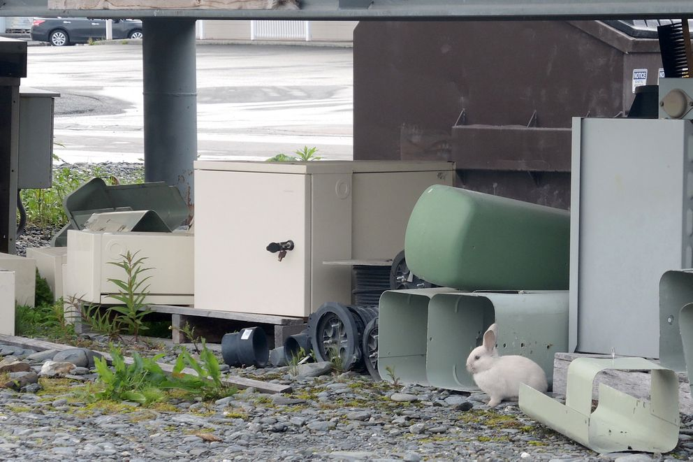 In downtown Valdez, where there's junk, there's a bunny. (Allison Sayer)