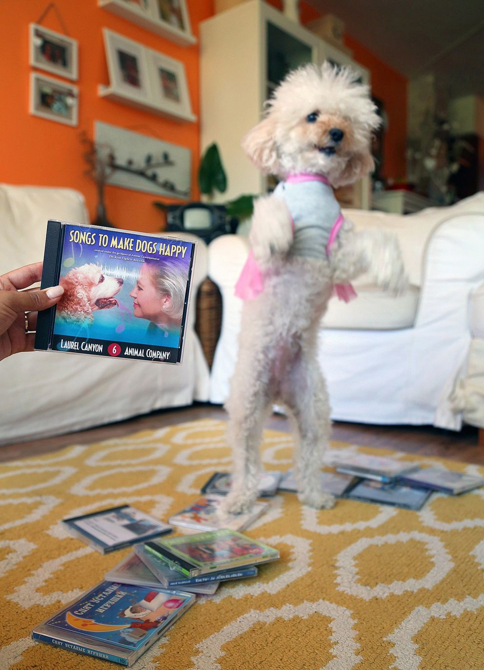"Songs to Make Dogs Happy. Actor is ""Chiqui"" La Rocca photographed at her home. (CARL JUSTE/MIAMI HERALD/TNS)"